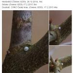 """V paralelní facebookové skupině Motýlí klenoty jde """"Klenotníkům"""" sběr vajec docela čile od ruky"""