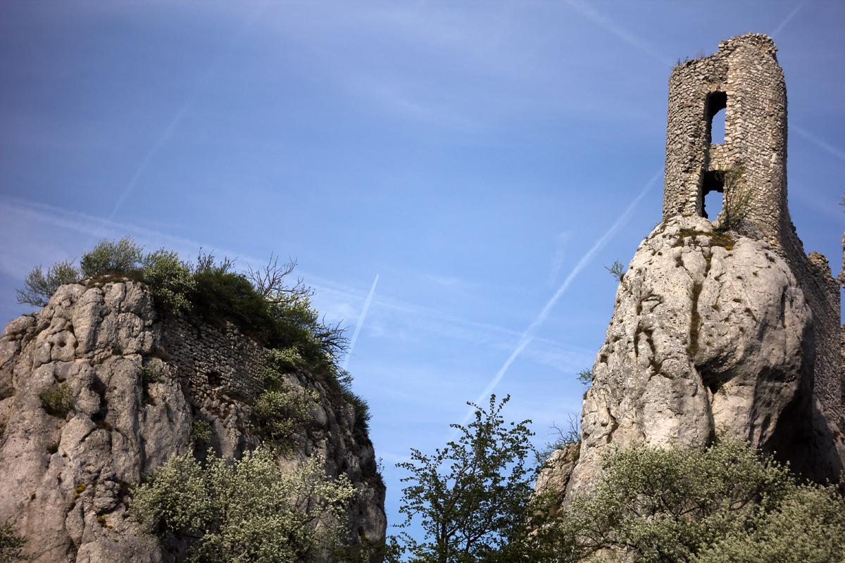 Blízké okolí klentnické ruiny je bohaté na výskyt modráska rozchodníkového (Scolitantides orion).