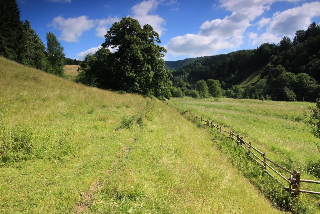 Velmi pěkný biotop (zdaleka nejen) okáče rosičkového na úpatí Stolových hor v jižím Polsku